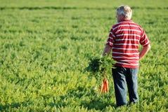 Fazendeiro e cenouras Fotografia de Stock Royalty Free