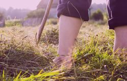 Fazendeiro e oblíquo no campo verde imagens de stock