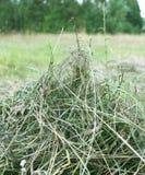 Fazendeiro e oblíquo no campo verde, plano excelente Fotos de Stock Royalty Free