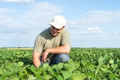 Fazendeiro em campos do feijão de soja Fotografia de Stock Royalty Free