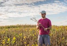 Fazendeiro em campos do feijão de soja Fotos de Stock