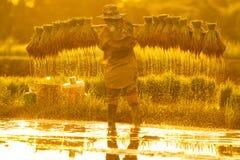 Fazendeiro em campos verdes imagem de stock royalty free