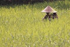 Fazendeiro em Lombok Indonésia Foto de Stock