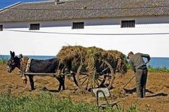 Fazendeiro em sua terra com asno Foto de Stock