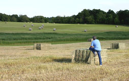 Fazendeiro em um campo colhido Imagens de Stock