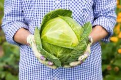 Fazendeiro fêmea Hold Fresh Cabbage no jardim de Vegetavle Fotografia de Stock Royalty Free