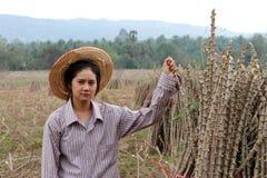 Fazendeiro fêmea que senta-se com membro das tapiocas que cortou a pilha junto na exploração agrícola foto de stock royalty free