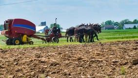 Fazendeiro Harvesting de Amish a colheita imagem de stock royalty free