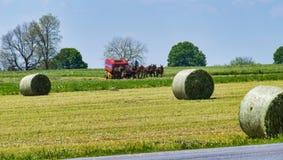 Fazendeiro Harvesting de Amish a colheita foto de stock