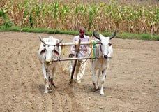 Fazendeiro indiano da vila Imagens de Stock Royalty Free