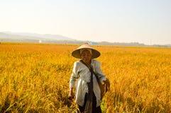 Fazendeiro indonésio que anda em campos do arroz Fotografia de Stock Royalty Free