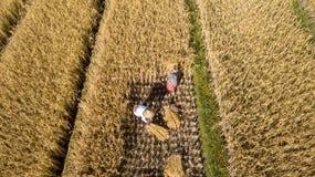 Fazendeiro manual Harvest à mão fotografia de stock