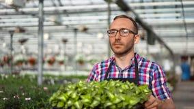 Fazendeiro masculino feliz que trabalha na estufa que anda com caixa completamente de plantas orgânicas da plântula filme