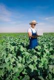Fazendeiro na planta dos brócolis Imagem de Stock Royalty Free