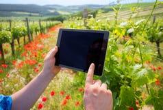 Fazendeiro na tabuleta e em usar da terra arrendada de vinhedo a tecnologia moderna para a análise de dados imagem de stock royalty free