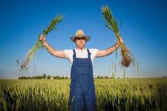 Fazendeiro no campo Foto de Stock Royalty Free