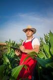 Fazendeiro no campo Foto de Stock
