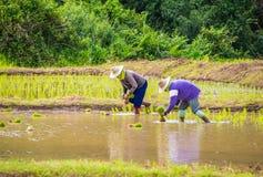 Fazendeiro no campo Imagem de Stock Royalty Free