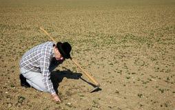 Fazendeiro no campo com plantas novas Fotografia de Stock