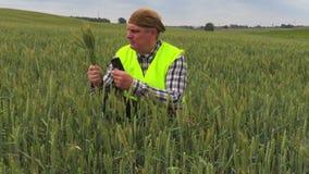 Fazendeiro no campo de cereal no dia ventoso video estoque