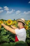 Fazendeiro no campo do girassol Imagens de Stock