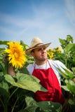 Fazendeiro no campo do girassol Fotografia de Stock