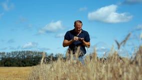 Fazendeiro no campo do trigo maduro tenta a grão para o gosto e dá o comando colher a colheita do trigo video estoque