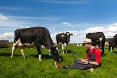 Fazendeiro novo com o portátil no campo com vacas Imagem de Stock Royalty Free