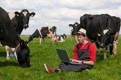 Fazendeiro novo com o portátil no campo com vacas Fotografia de Stock Royalty Free