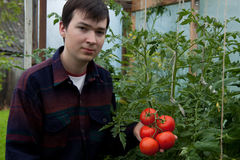 Fazendeiro novo com tomates imagens de stock
