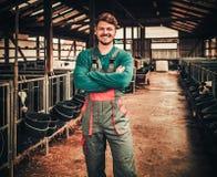 Fazendeiro novo em um estábulo em uma exploração agrícola de leiteria foto de stock royalty free