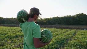 Fazendeiro novo que colhe a colheita da melancia no campo da exploração agrícola orgânica filme