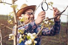 Fazendeiro novo que usa a lupa para examinar a árvore imagem de stock royalty free