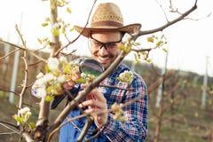 Fazendeiro novo que usa a lupa para examinar a árvore fotos de stock