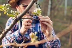 Fazendeiro novo que usa a lupa para examinar a árvore fotografia de stock