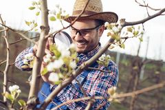 Fazendeiro novo que usa a lupa para examinar a árvore foto de stock