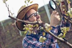 Fazendeiro novo que usa a lupa para examinar a árvore imagens de stock