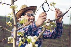 Fazendeiro novo que usa a lupa para examinar a árvore imagem de stock