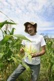 Fazendeiro orgânico que mostra o milho dentro da plantação Imagem de Stock Royalty Free