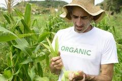 Fazendeiro orgânico que mostra o milho dentro da plantação imagens de stock royalty free