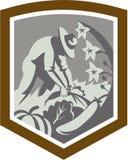 Fazendeiro orgânico Cultivating Vegetables Shield Imagem de Stock