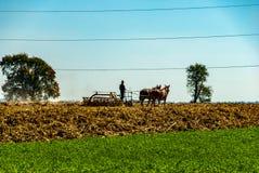 Fazendeiro Plowing de Amish os campos fotografia de stock royalty free