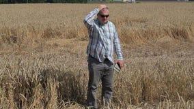 Fazendeiro preocupado no campo de cereal destruído vídeos de arquivo