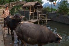 Fazendeiro Pulling Buffalo em Guilin imagens de stock