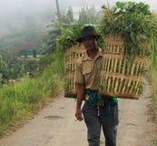 Fazendeiro que alimentava seu gado Fotos de Stock
