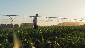 Fazendeiro que anda através de um campo de milho no por do sol vídeos de arquivo