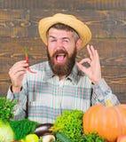 Fazendeiro que apresenta a pimenta quente o fundo de madeira Conceito da colheita da pimenta O fazendeiro r?stico no chap?u de pa foto de stock