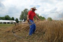 Fazendeiro que colhe o trigo com foice Imagem de Stock Royalty Free