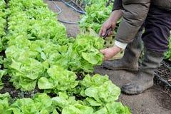 Agricultura Imagem de Stock Royalty Free