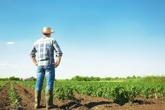 Fazendeiro que está no campo com plantas verdes fotografia de stock